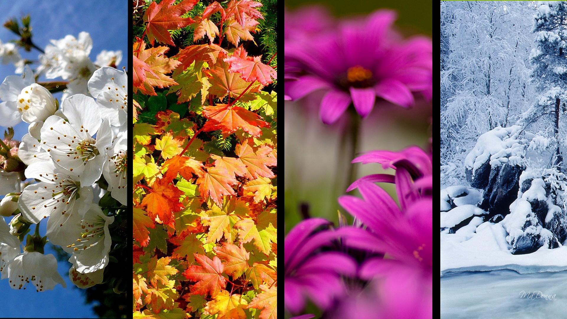 обои на рабочий стол природа осень и зима цветы № 230103 без смс
