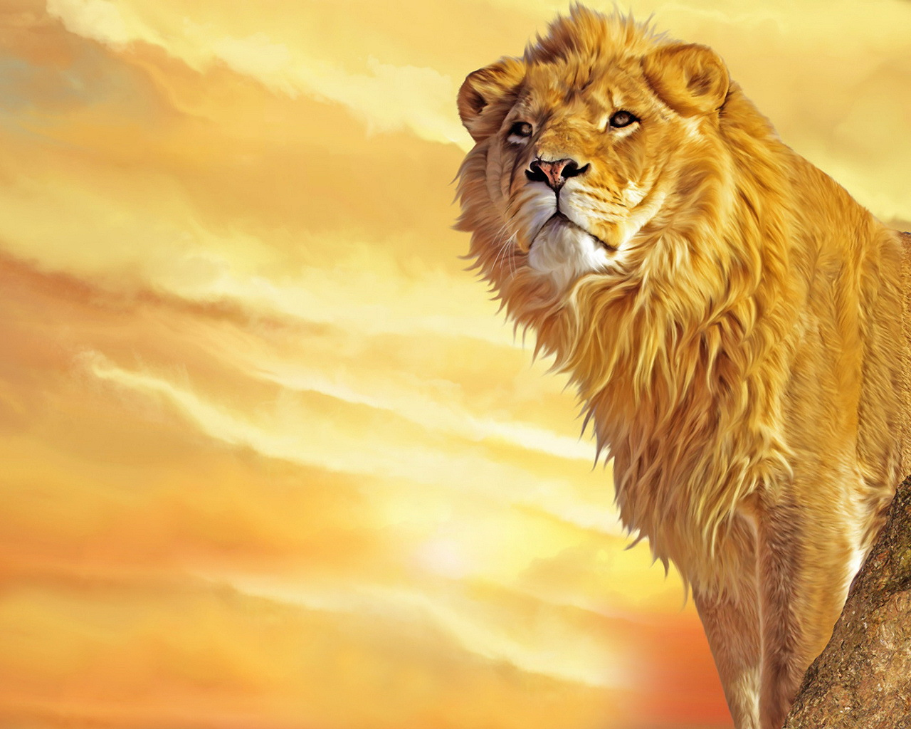 lion wallpaper widescreen 1280x1024