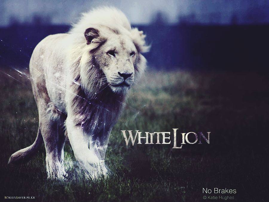 White Lion Wallpaper by hidorE 900x675