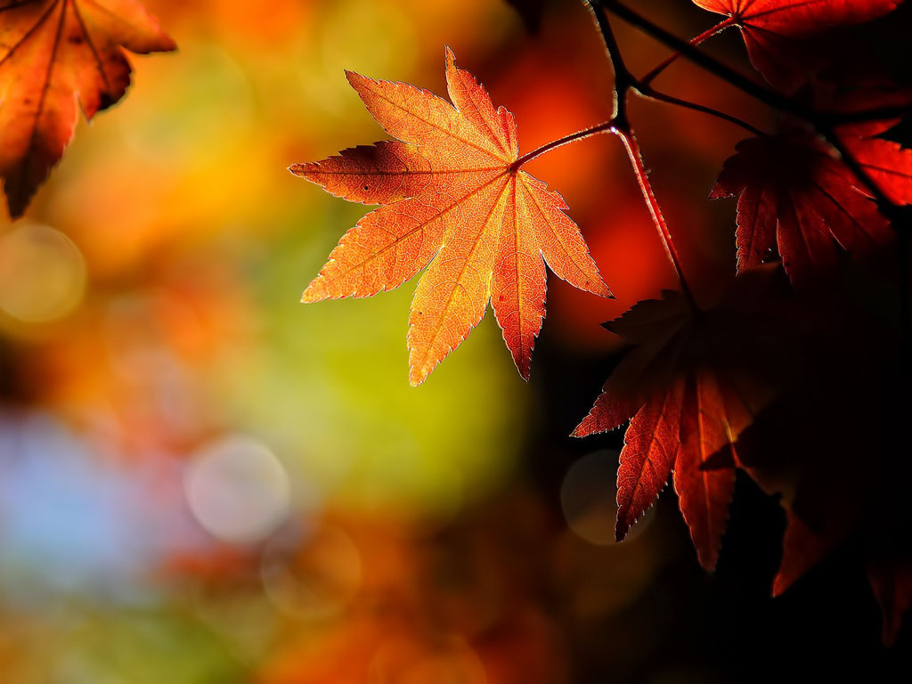 Tag Windows 7 Autumn Wallpapers Backgrounds PhotosImages and 1024x768