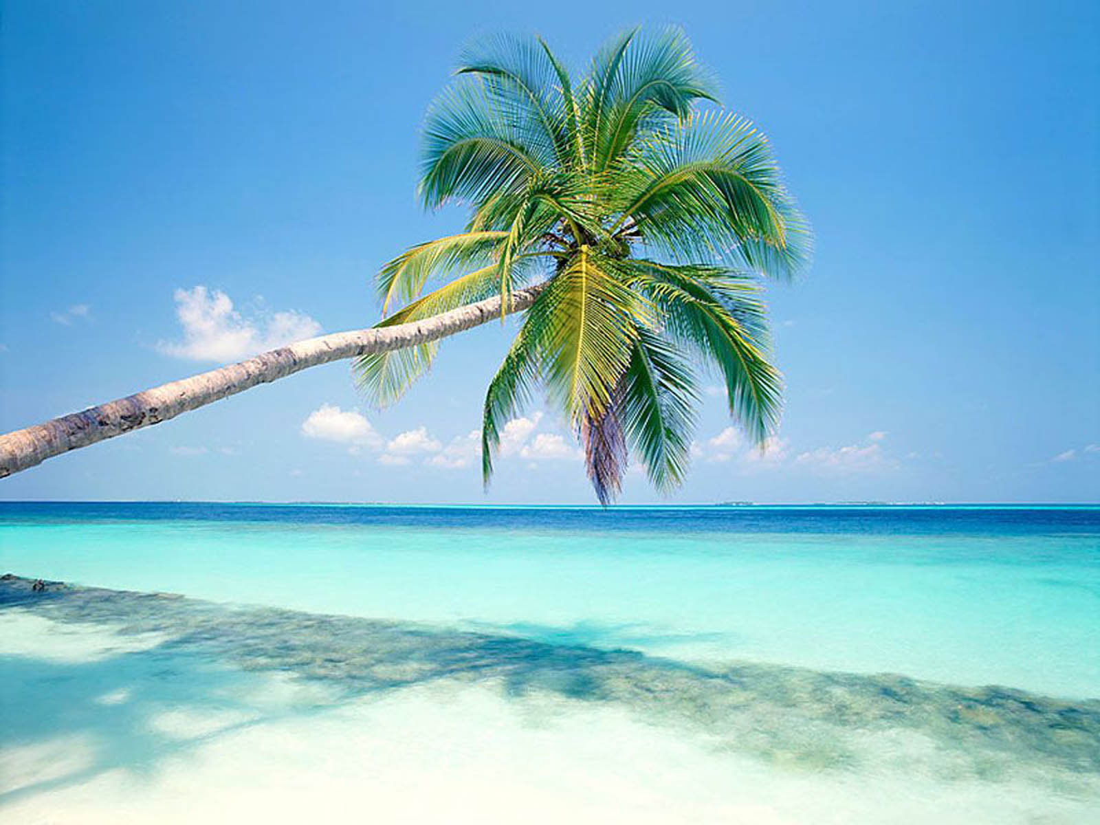 wallpaper Palm Trees Wallpapers 1600x1200