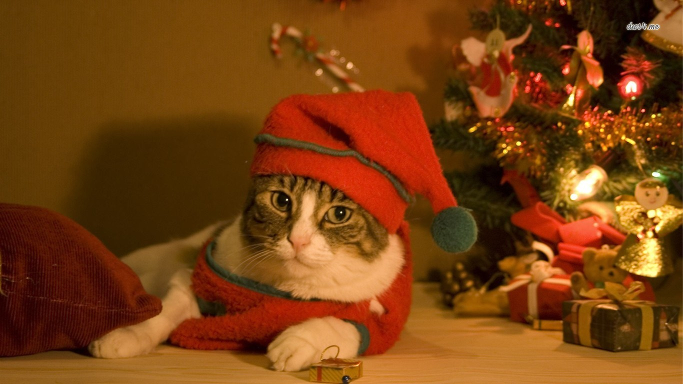 Christmas cat wallpaper   Animal wallpapers   12695 1366x768