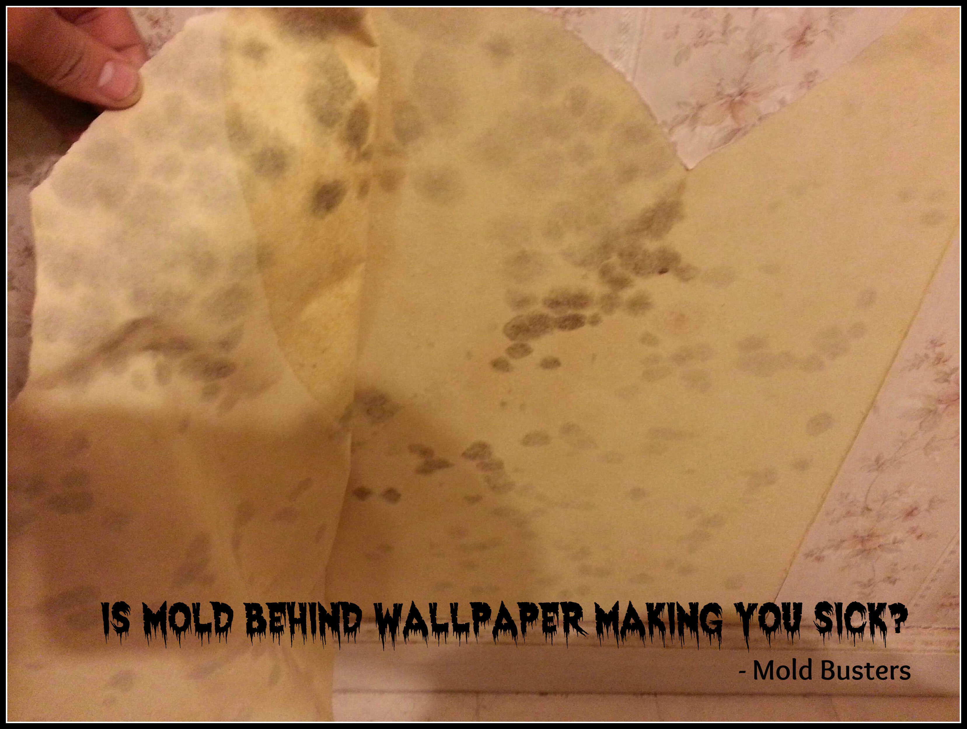 How to Inspect a Home for Mold Mold Busters Blog 3314x2498