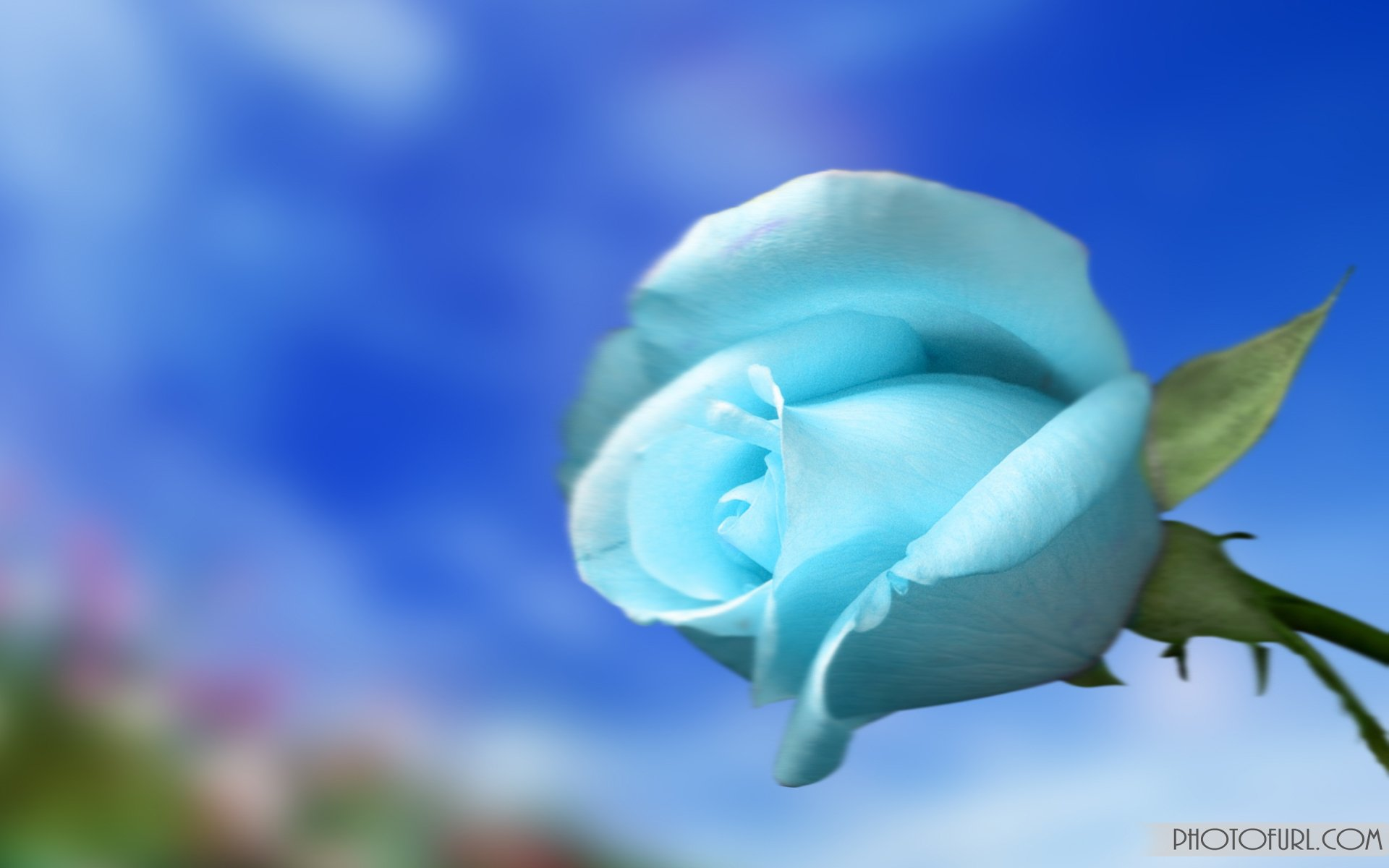 Light Blue Flower Wallpaper - WallpaperSafari Light Blue Flower Wallpaper
