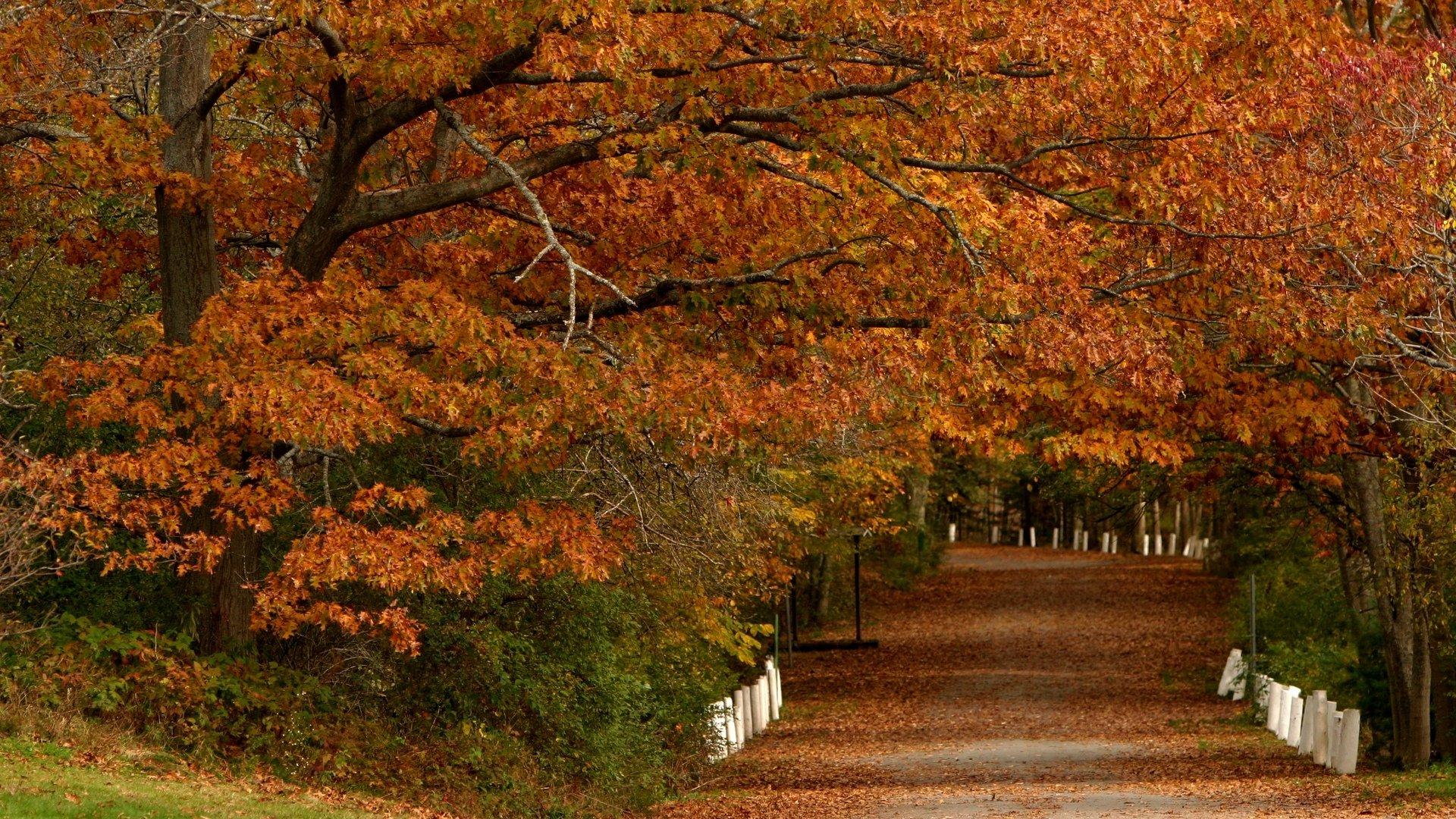 Autumn Scenes wallpaper   68741 1920x1080