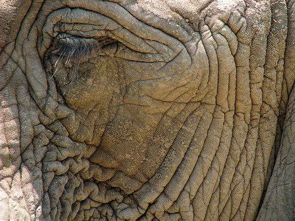 Elephant Skin Wallpaper 600x450