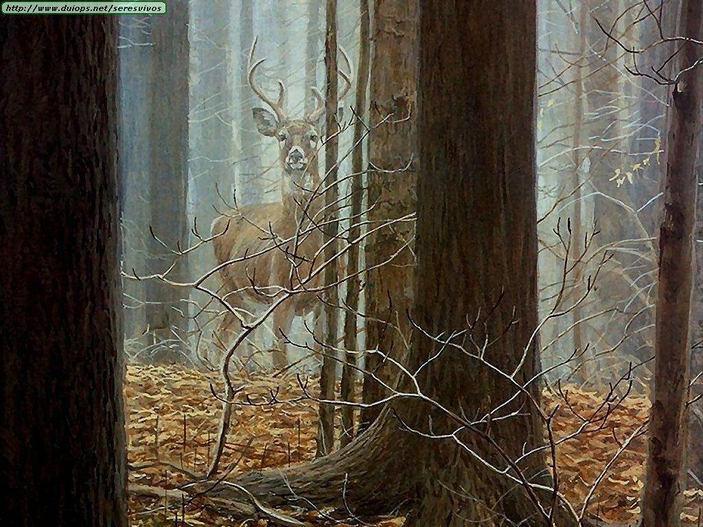 Whitetail Deer Backgrounds 1024x768
