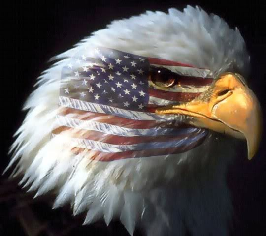 American Eagle Wallpaper American Eagle Desktop Background 540x480