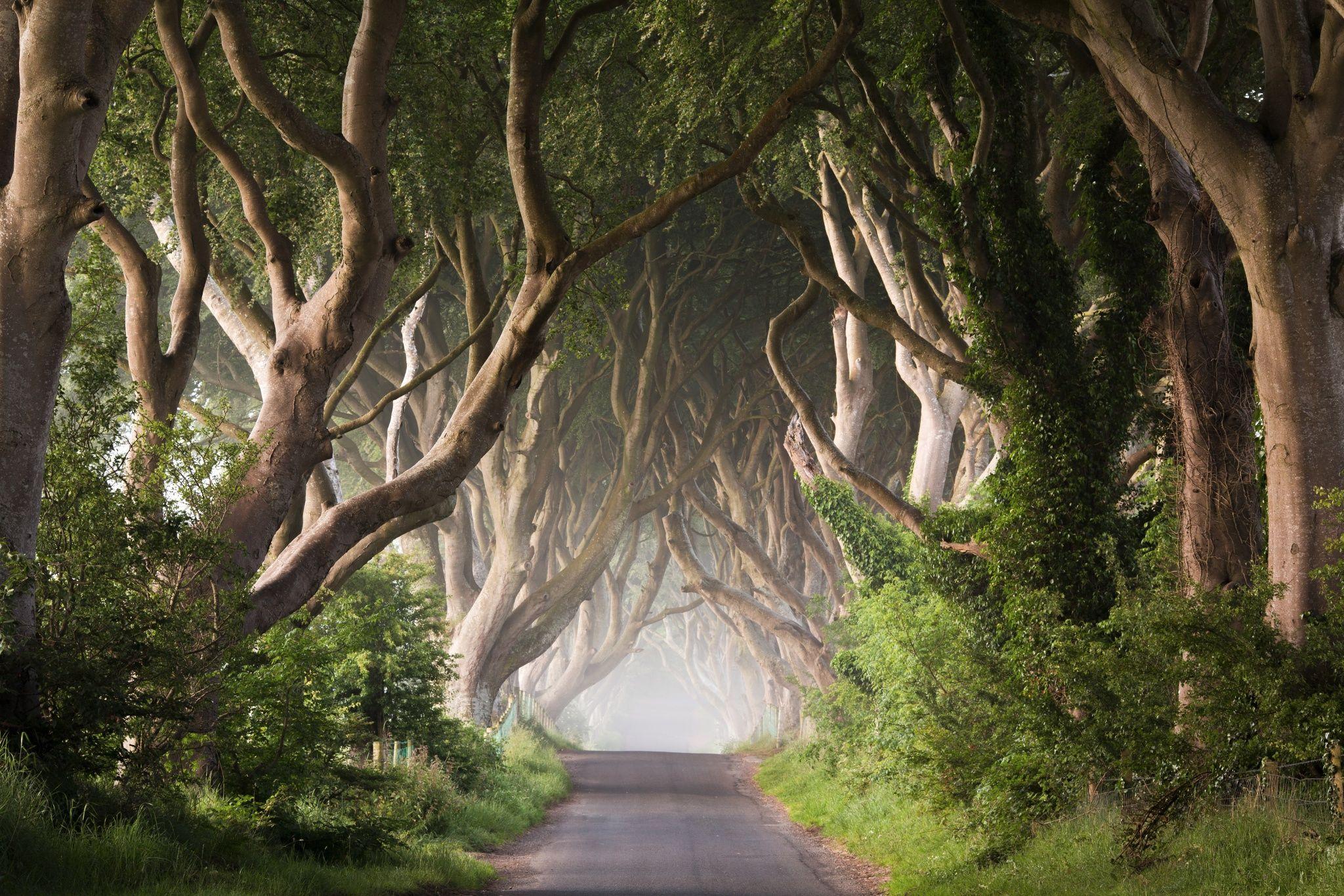 The Dark Hedges Northern Ireland Me Ireland landscape 2048x1365