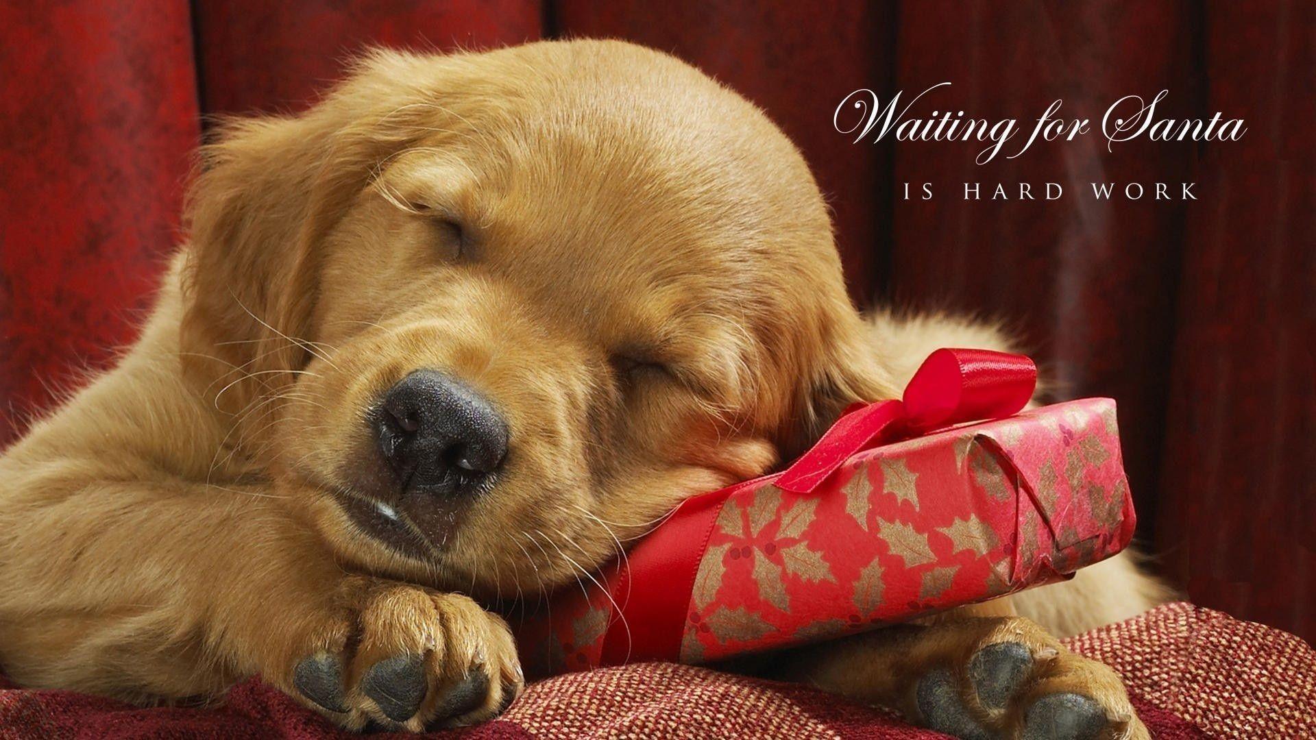 Sleeping Dog Christmas Wallpaper   HD Wallpapers 1920x1080