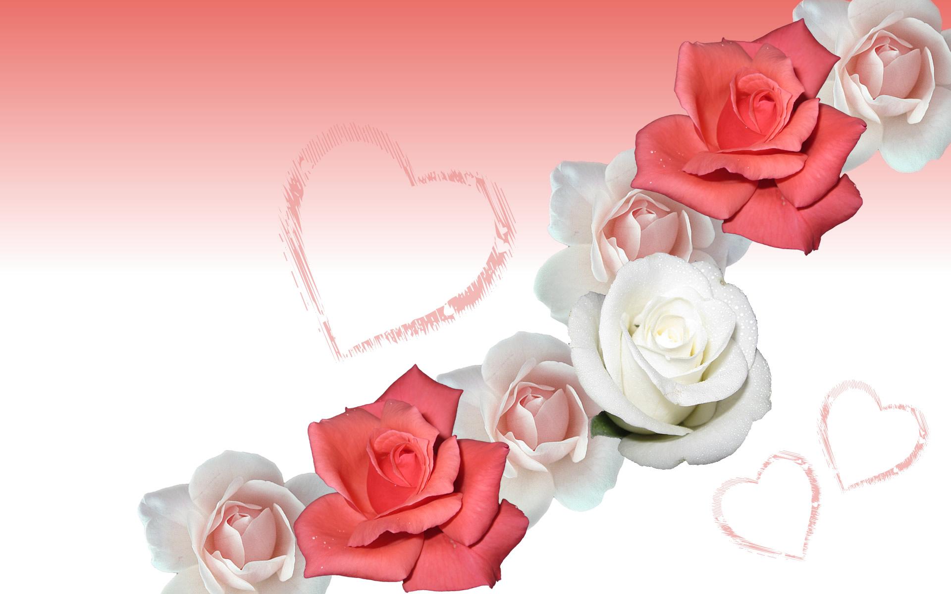 Romantic rose wallpaper 1920x1200