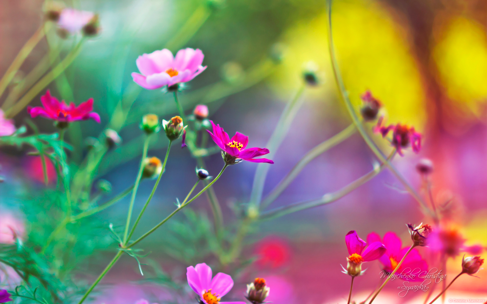 Flower Wallpapers for ...