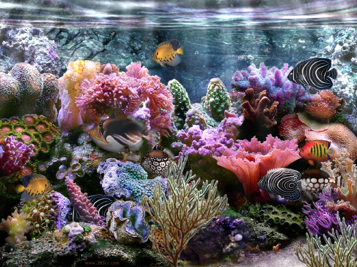 Coral Reef Wallpaper Widescreen HD wallpaper background 1152x864