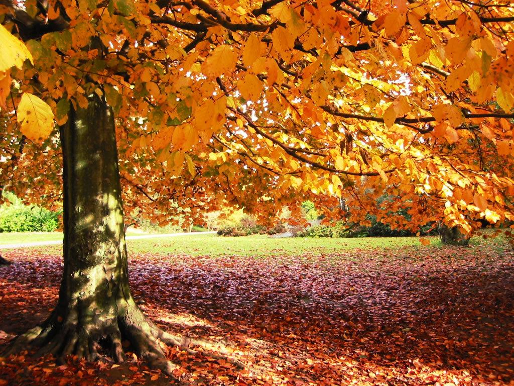 Autumn Wallpaper Pictures Images 1024x768