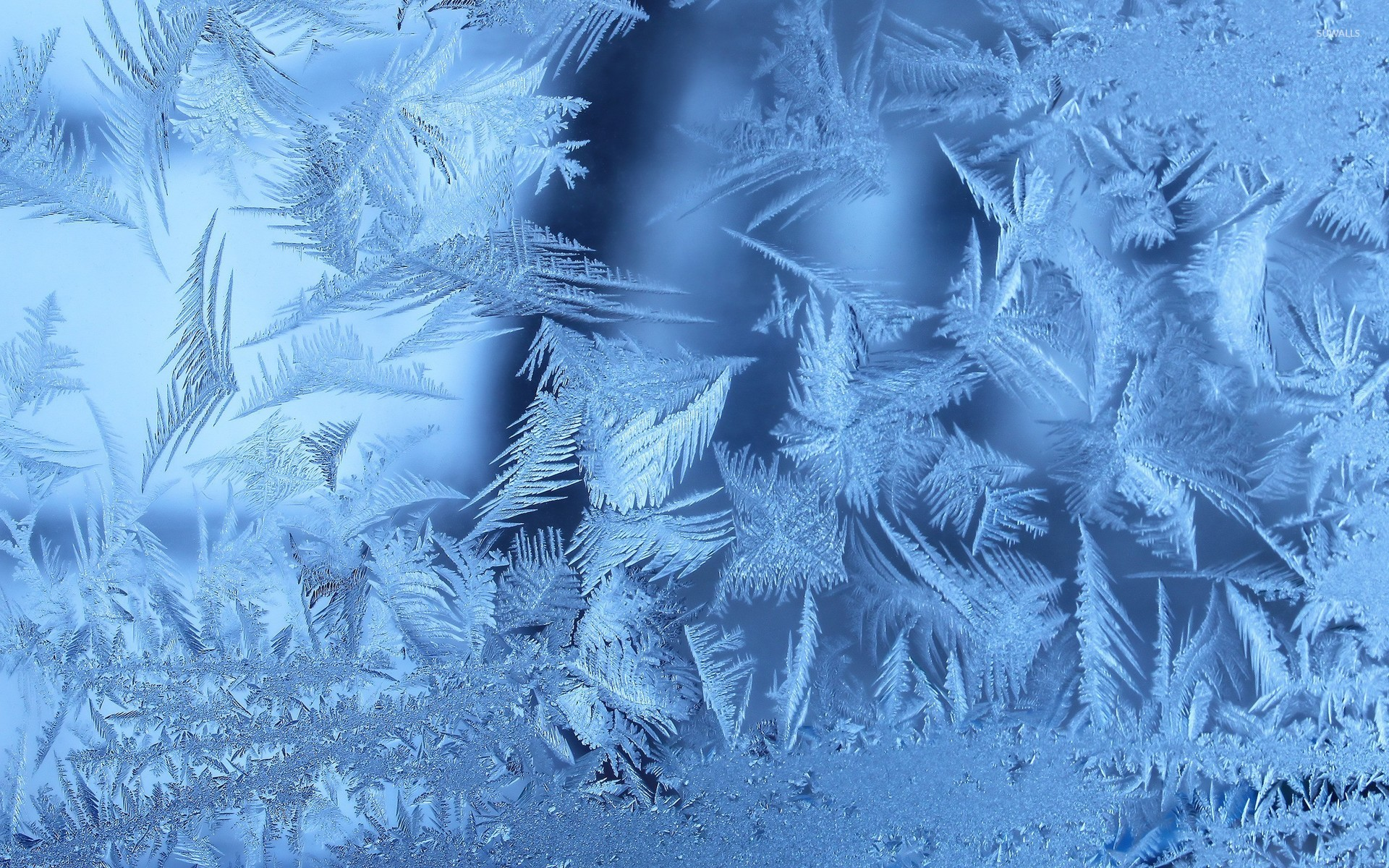 Frost wallpaper   Artistic wallpapers   9028 1920x1200
