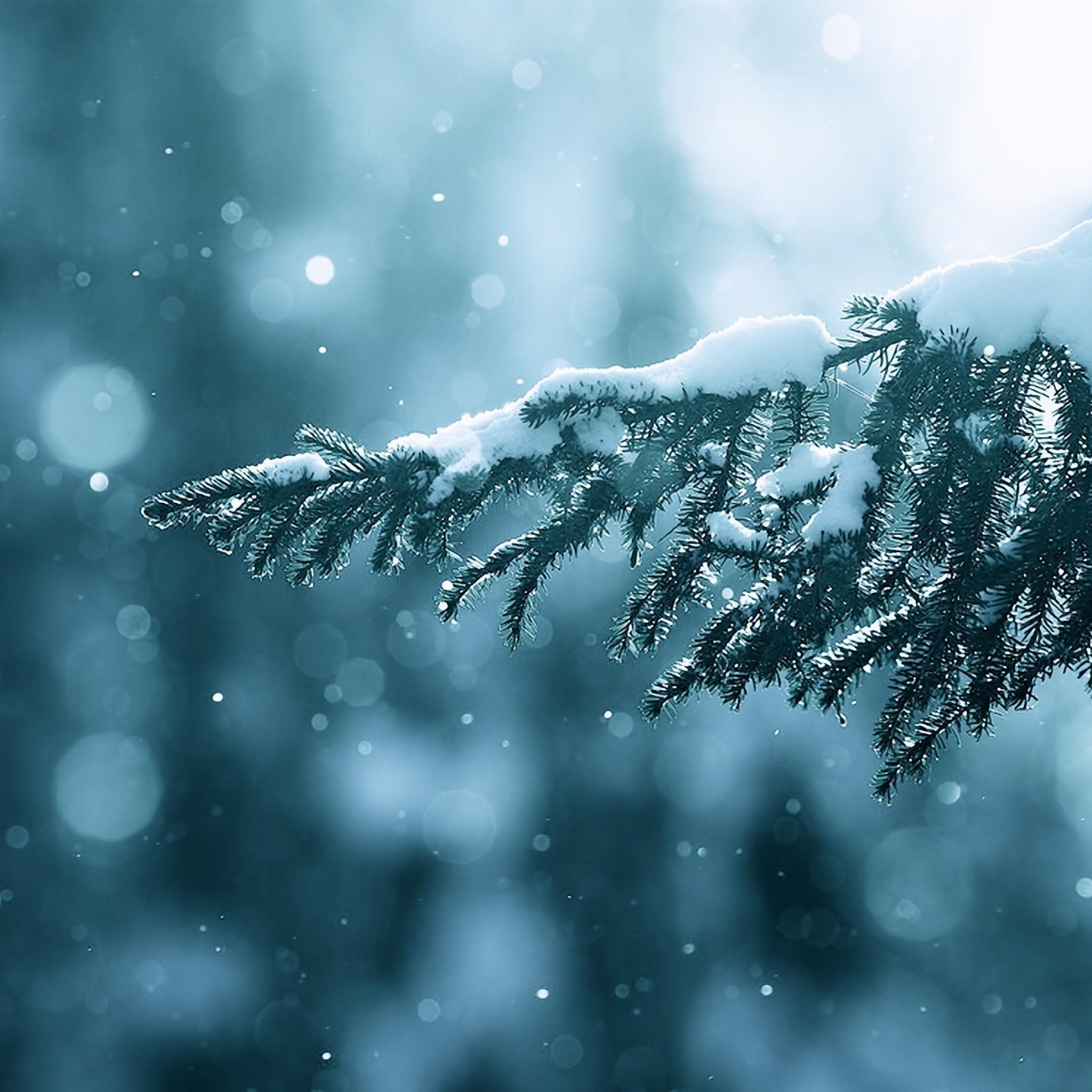 Winter Wallpaper: Winter Wallpaper For IPad