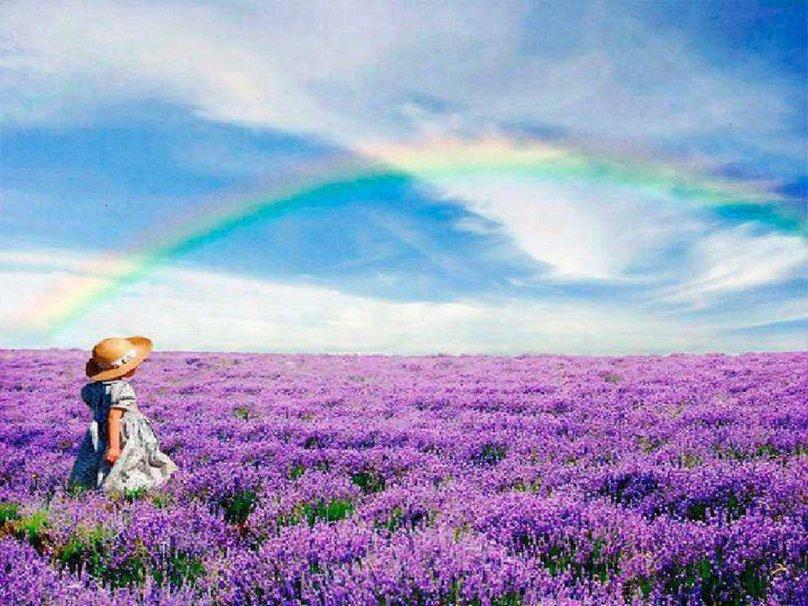 Lavender Fields Wallpaper Rainbow over lavender fields 808x606