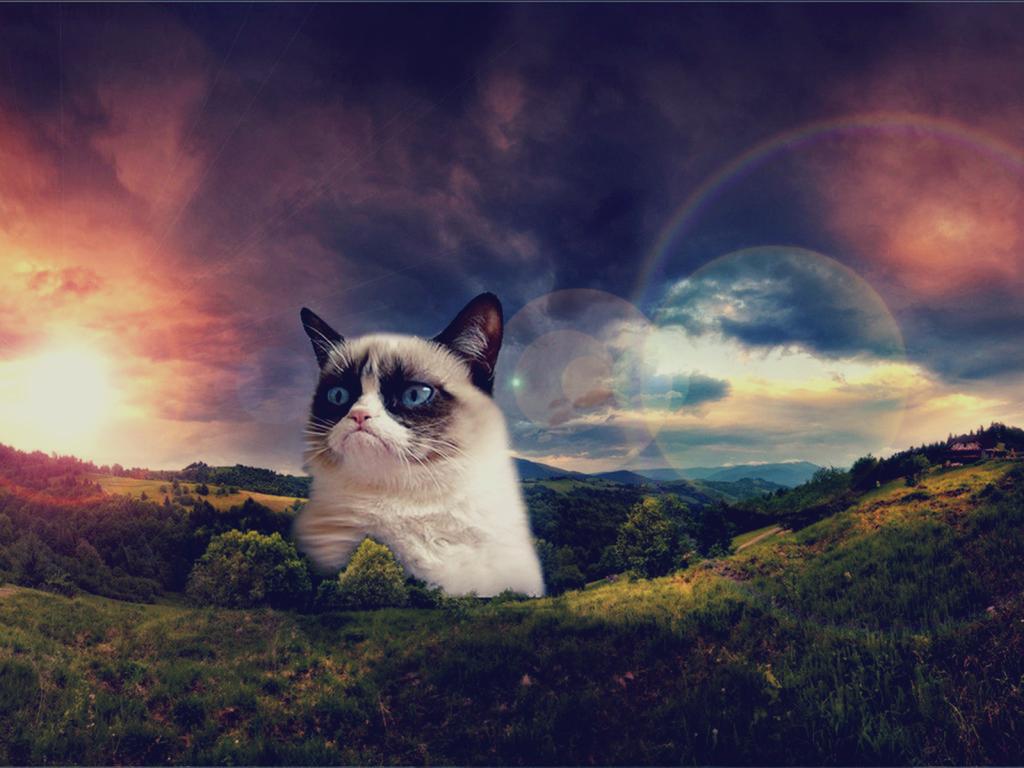 Get Your Grumpy Cat Wallpaper 1024x768