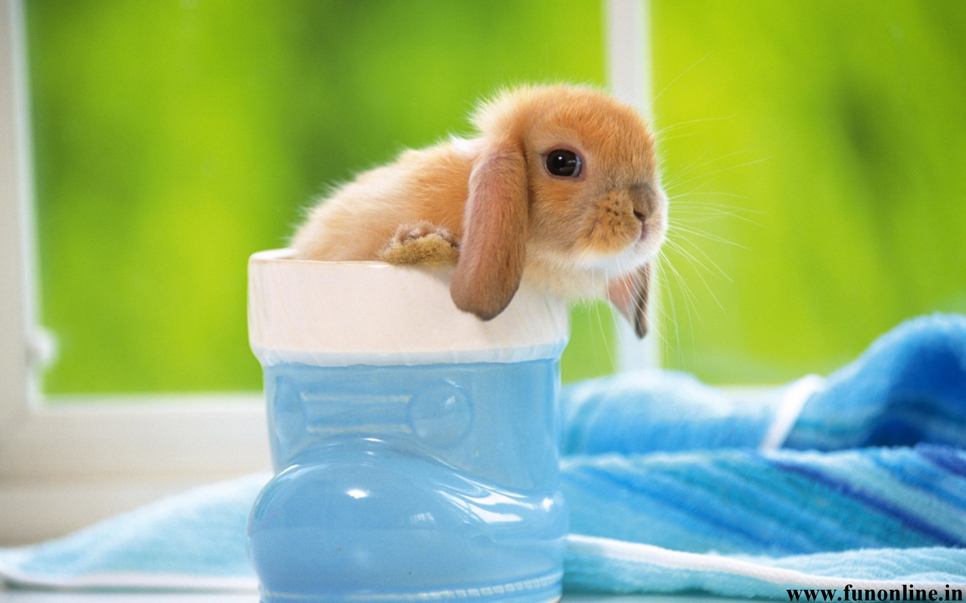 Free Download Rabbit Wallpapers Download Cute Baby Rabbits