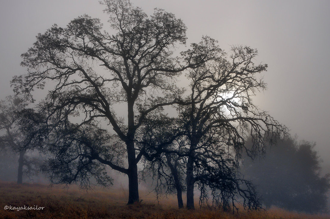 Pin Trees And Fog Wallpaper 1366x768 1440x900 1096x728