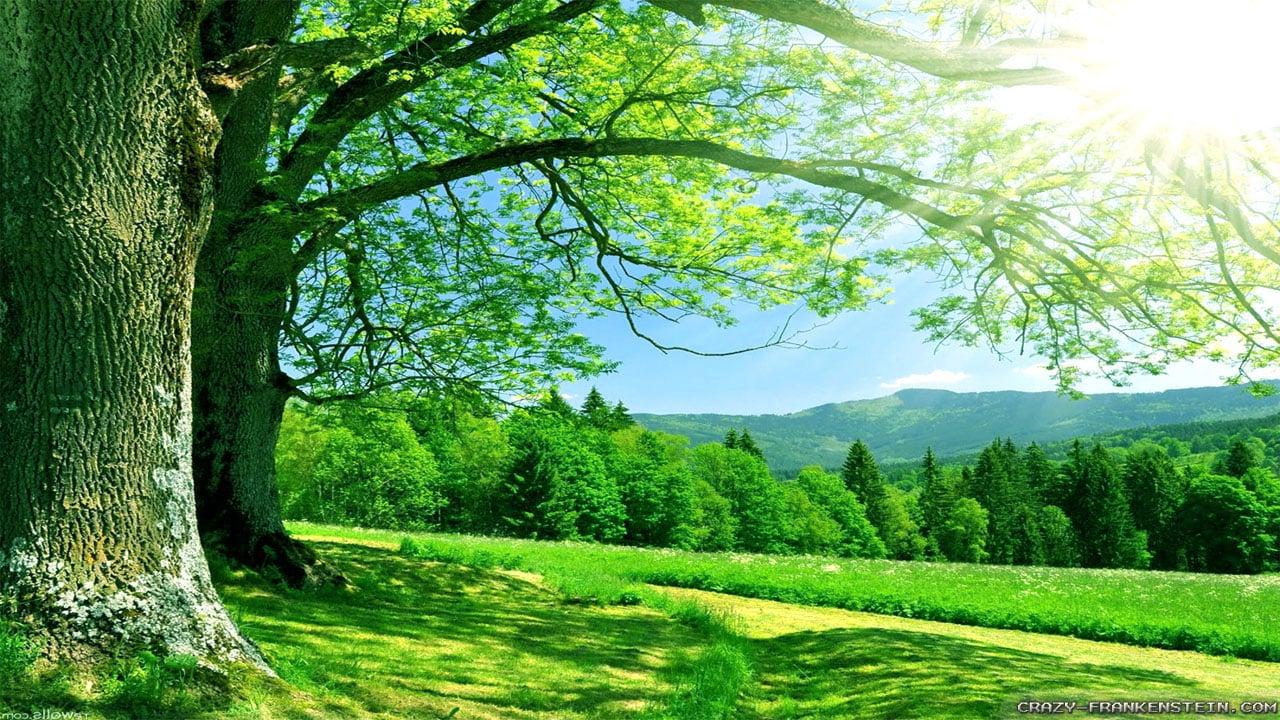 Summer Nature Wallpaper 1280x720
