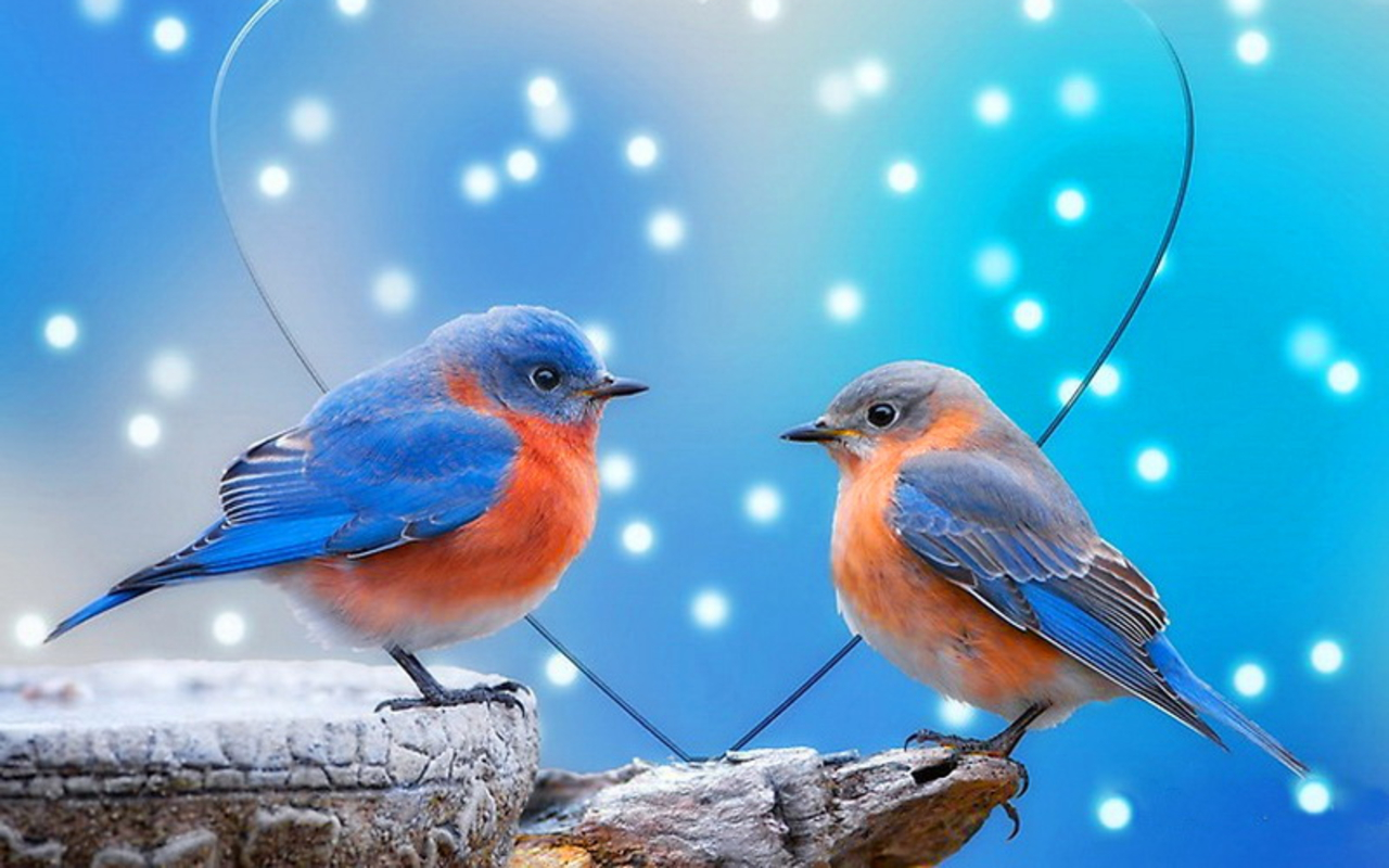 Free Download Birds Wallpapers Live Hd Wallpaper Hq Pictures Images Photos 1280x800 For Your Desktop Mobile Tablet Explore 49 Download Love Wallpapers Love Desktop Wallpaper Free Valentine Desktop Wallpaper