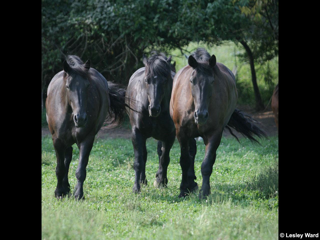 free horse screensavers and - photo #9