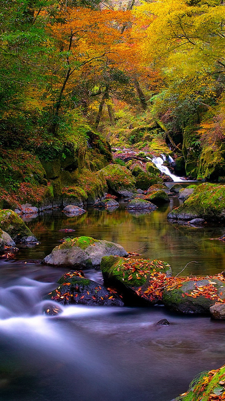 Forest Creek Autumn iPhone 6 Wallpaper iPod Wallpaper HD 750x1334