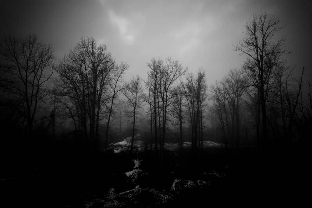 Free Download Haunted Forest Wallpaper 1024x685 For Your