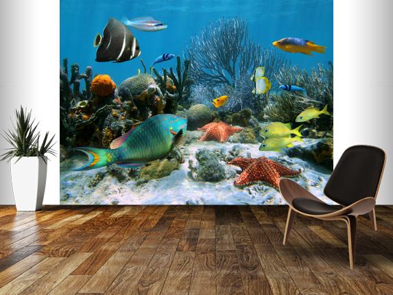 Coral Reef Wall Mural Coral Reef Wallpaper 573x430