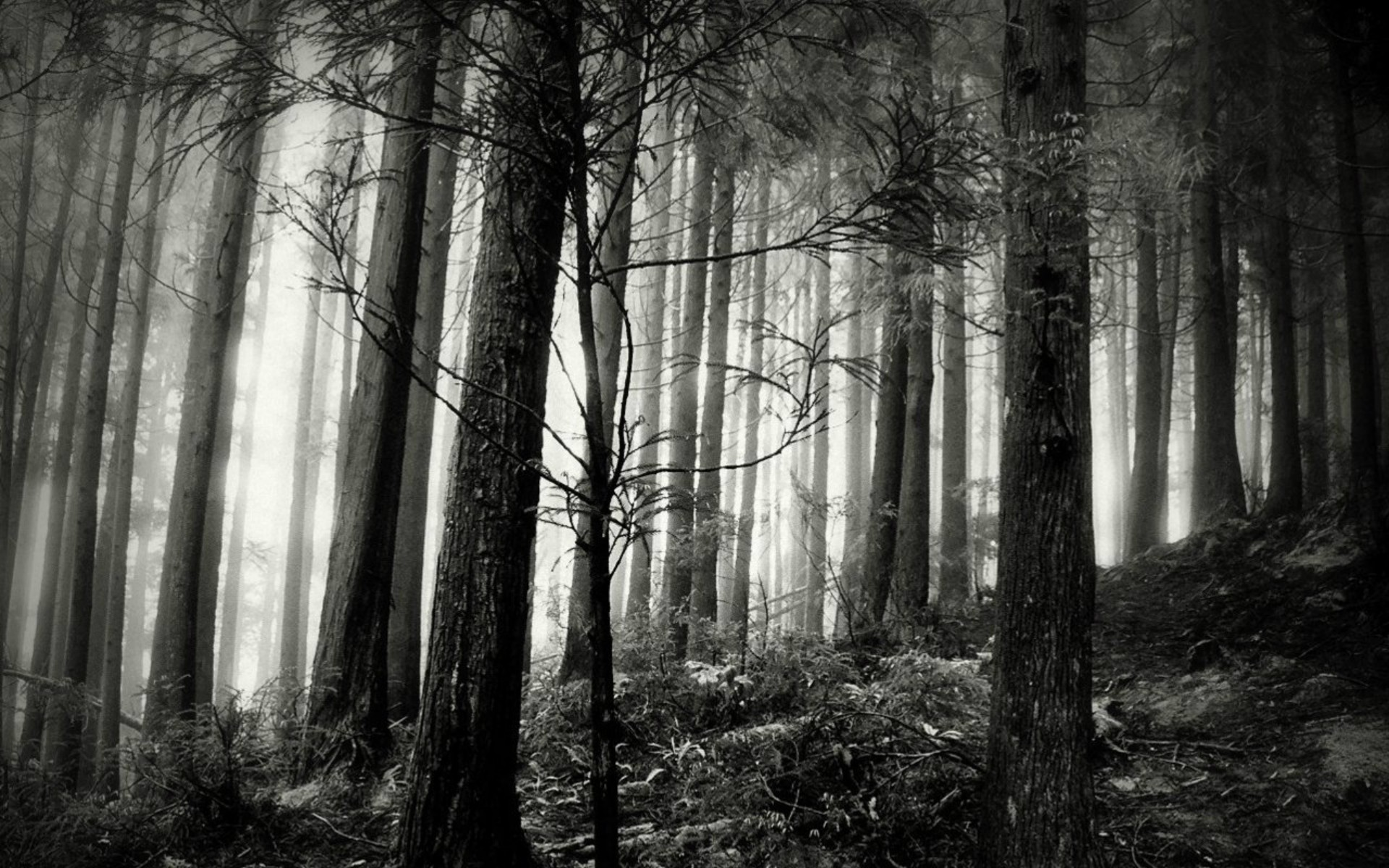 Black And White Forest Wallpaper   HD Wallpapers Pretty 1920x1200