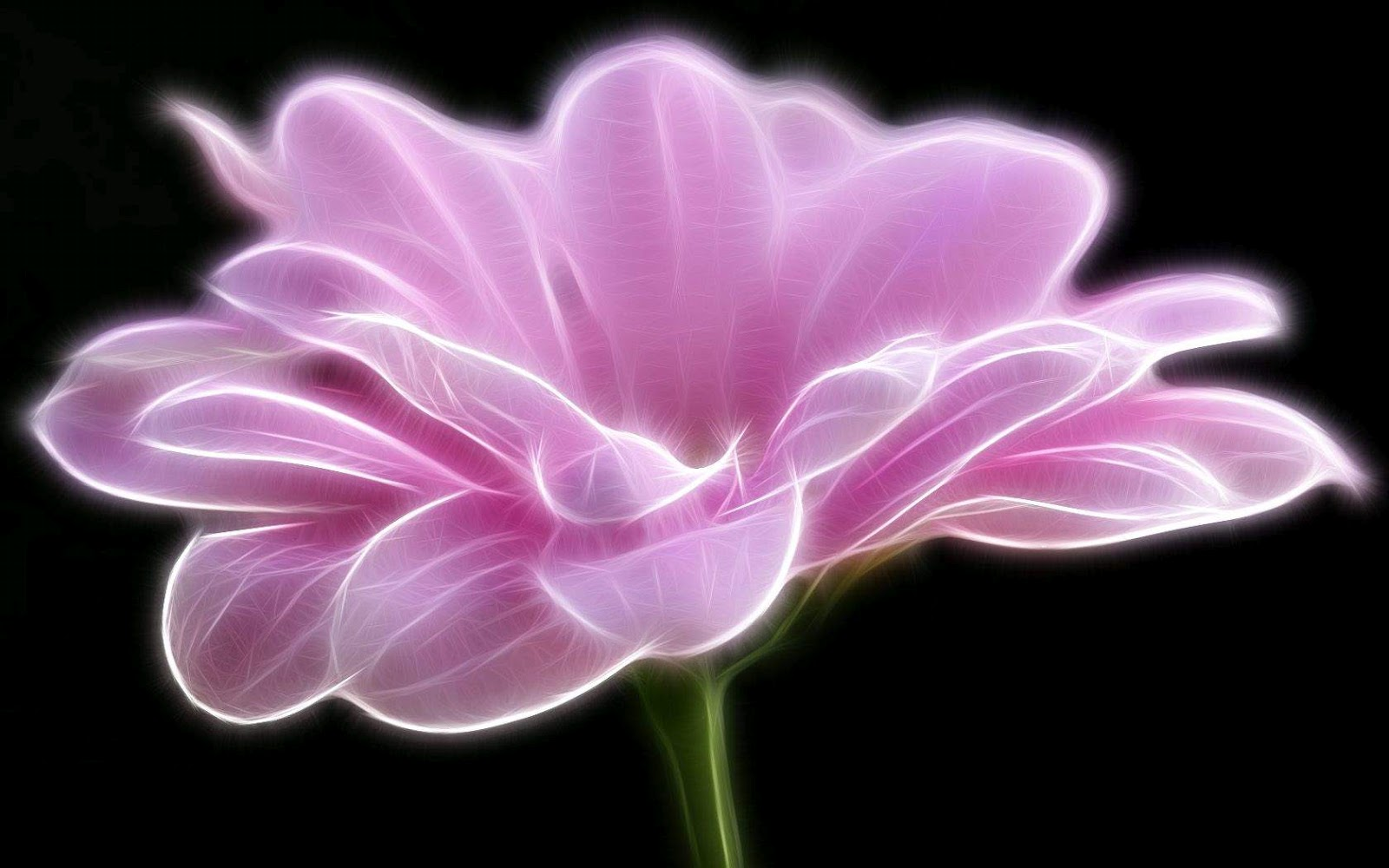 Black And White Wallpapers Artistic Pink Flower Wallpaper