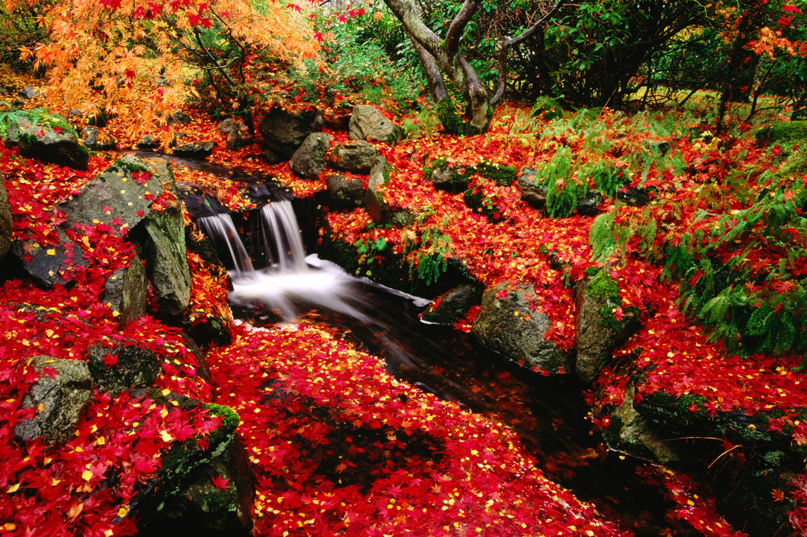 Wallpaper Views Red Leaves Beautiful Fall Landscapes HD Wallpapers 1600x1066