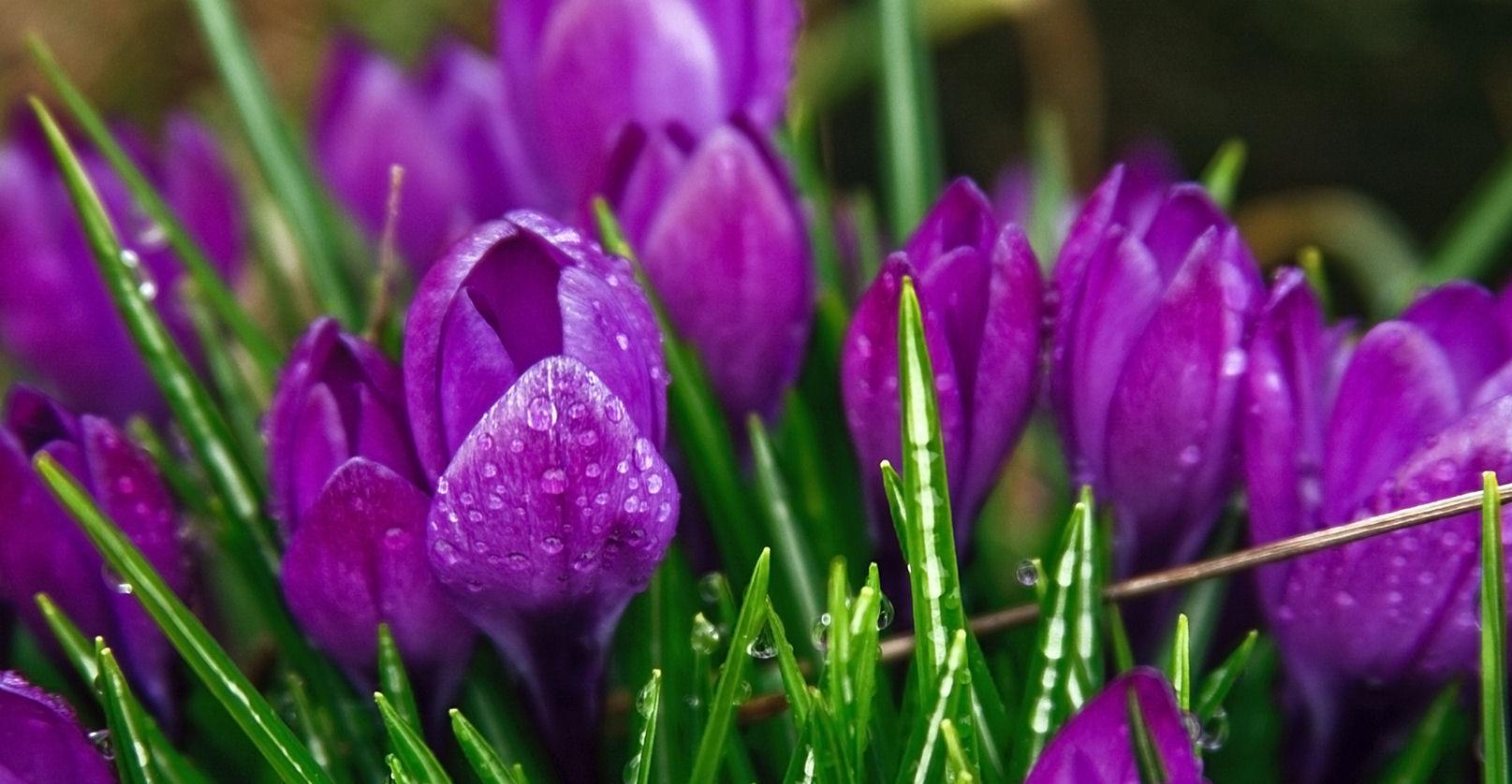 Purple Flowers Twitter Backgrounds Purple Flowers Twitter Themes 1615x838