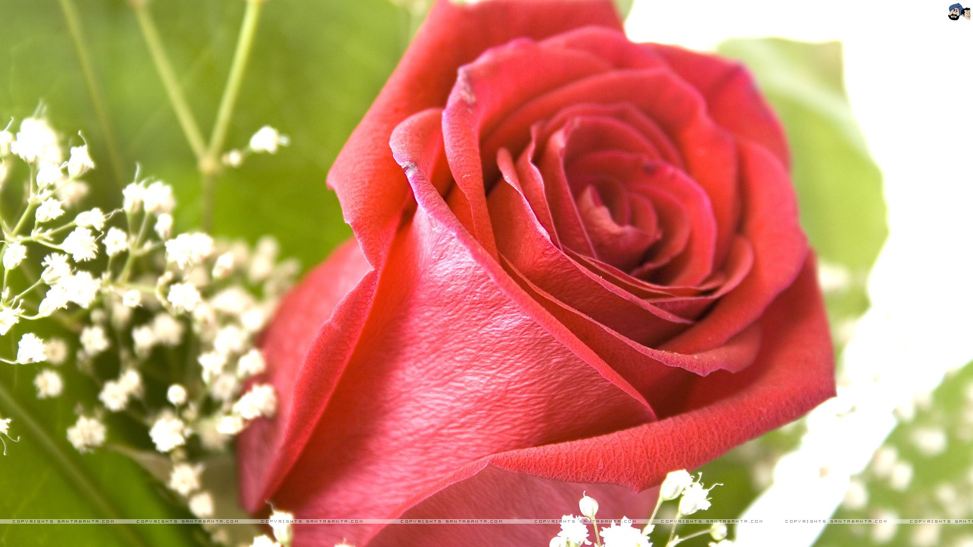 76 beautiful rose wallpapers on wallpapersafari - Pretty roses wallpaper ...
