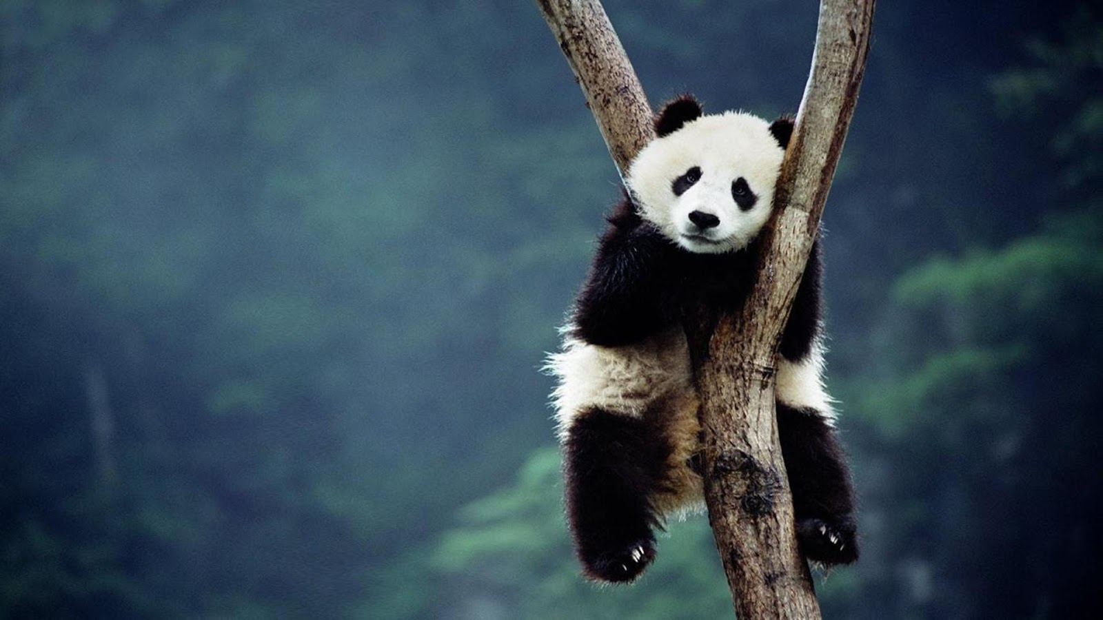 Panda Latest Hd Wallpapers Download Wallpapers Just do It 1600x900