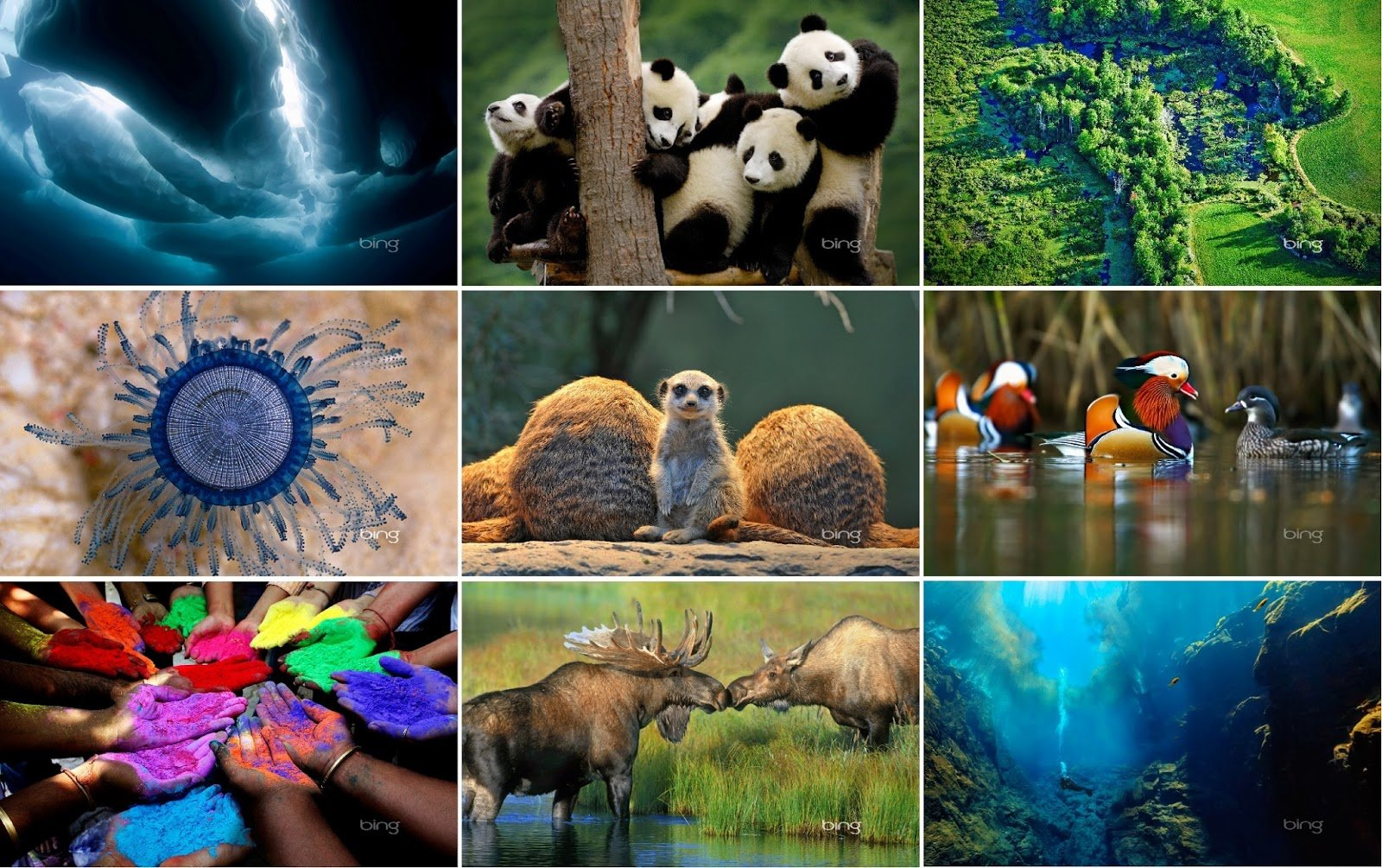 bing wallpapers pack 2013 at of cost bing wallpapers collection 1600x1005