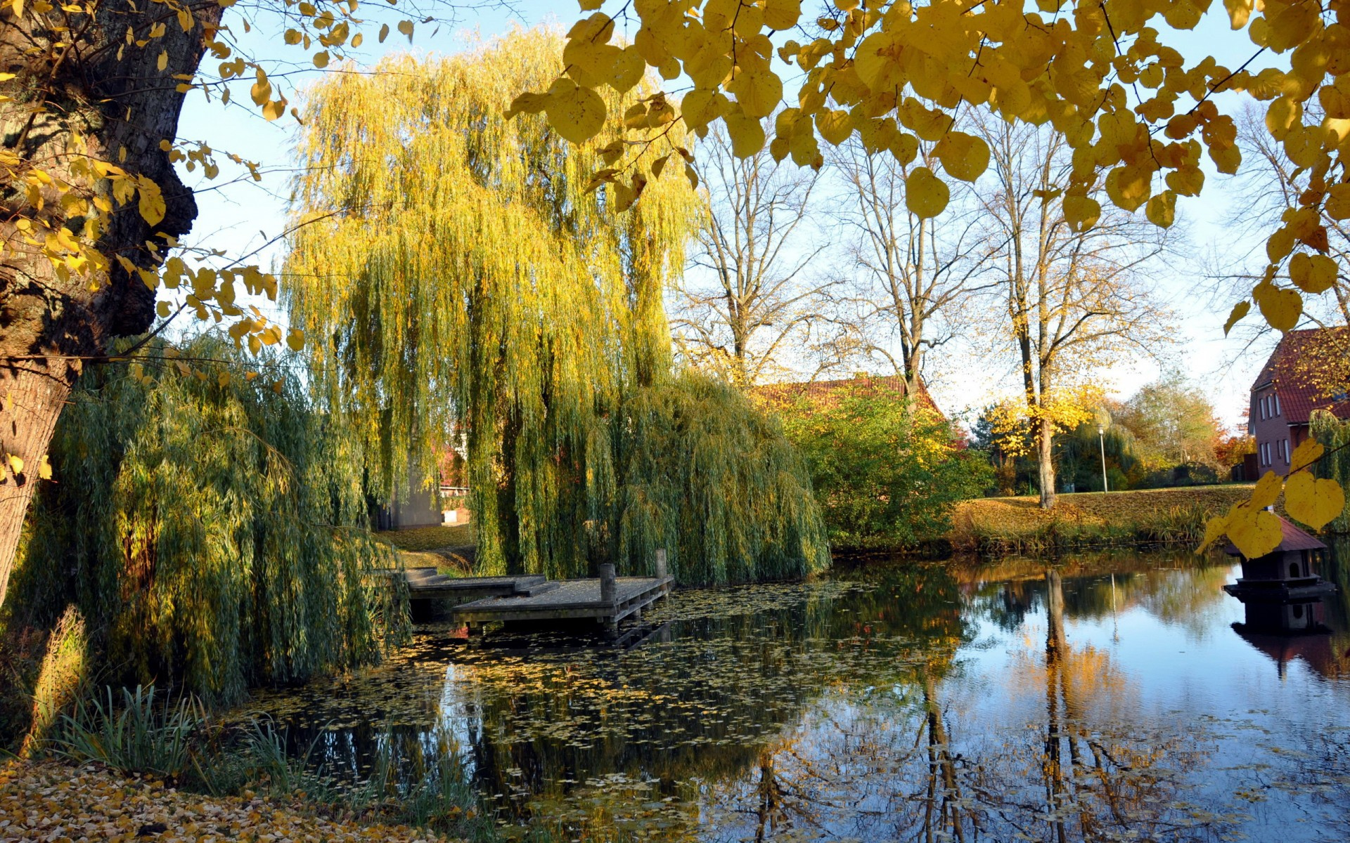 Weeping willow pond wallpapers and images 1920x1200
