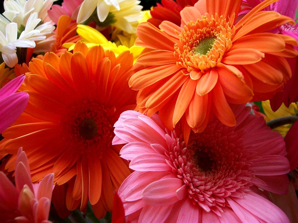 Beautiful Flowers Wallpaper 1024x768