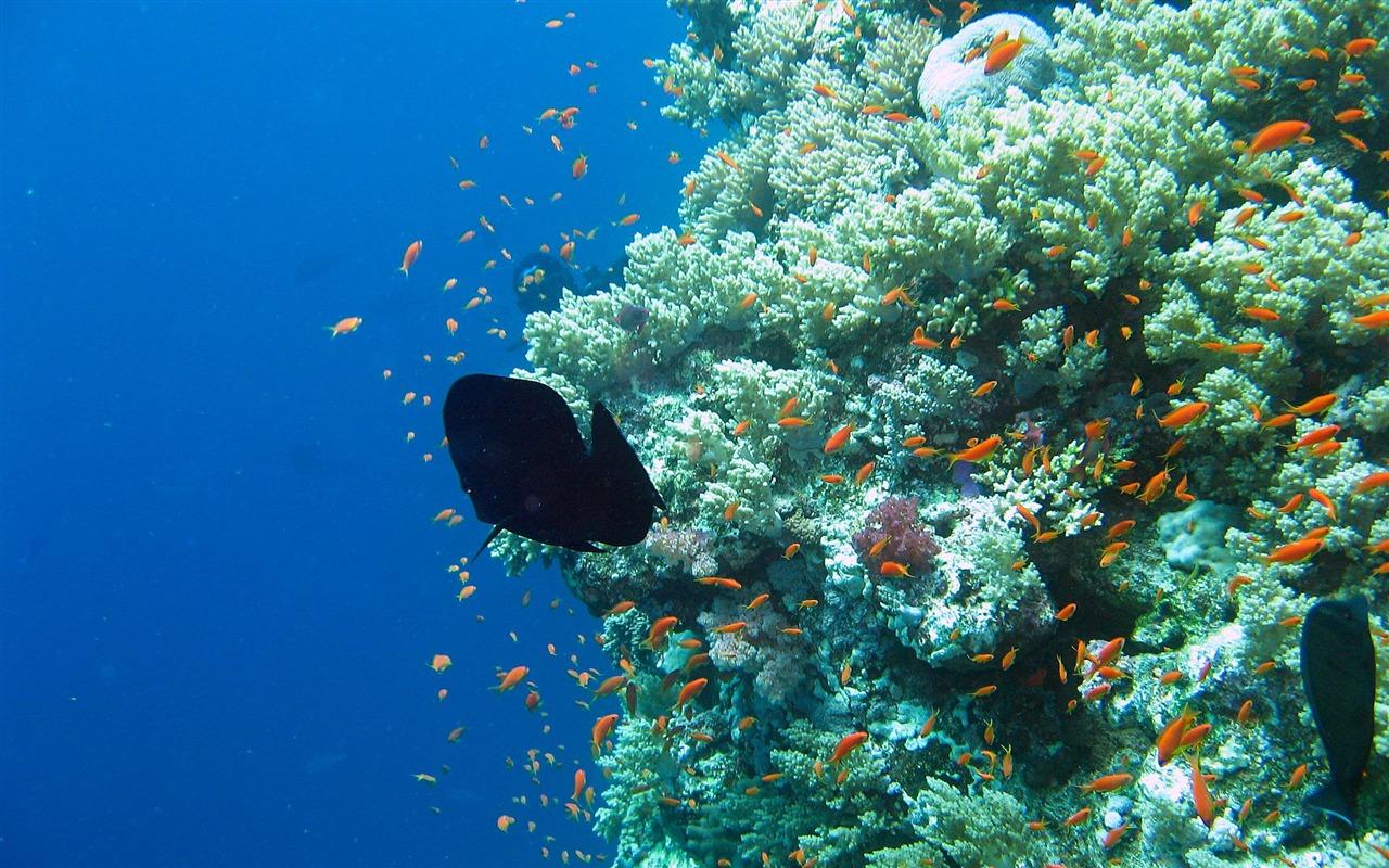 Gena Downs coral reef wallpaper hd 1280x800