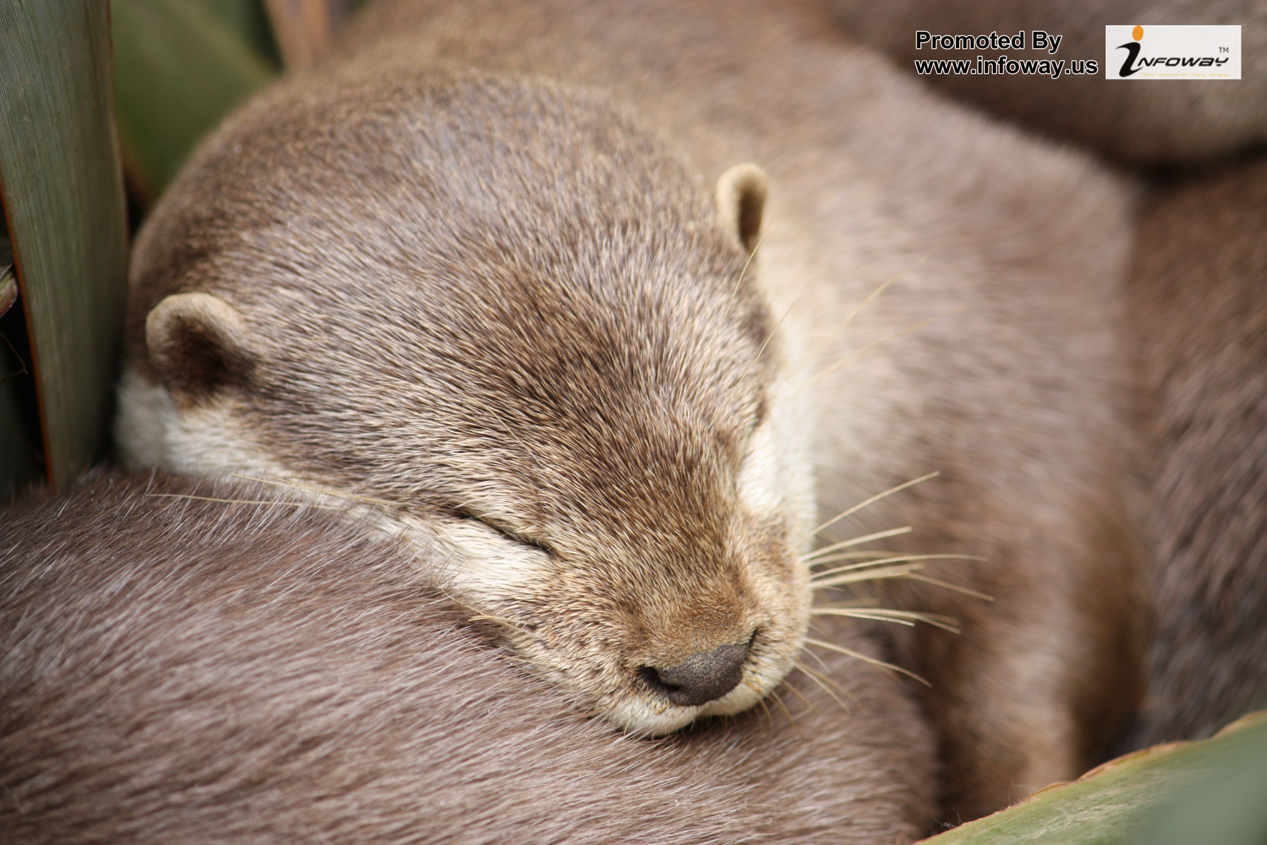 Cute Otters Wallpaper Hd   Photo 27 of 217 phombocom 4272x2848