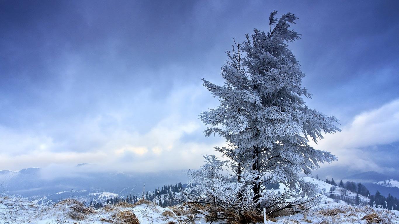 Snowy fir tree wallpaper 11531 1366x768