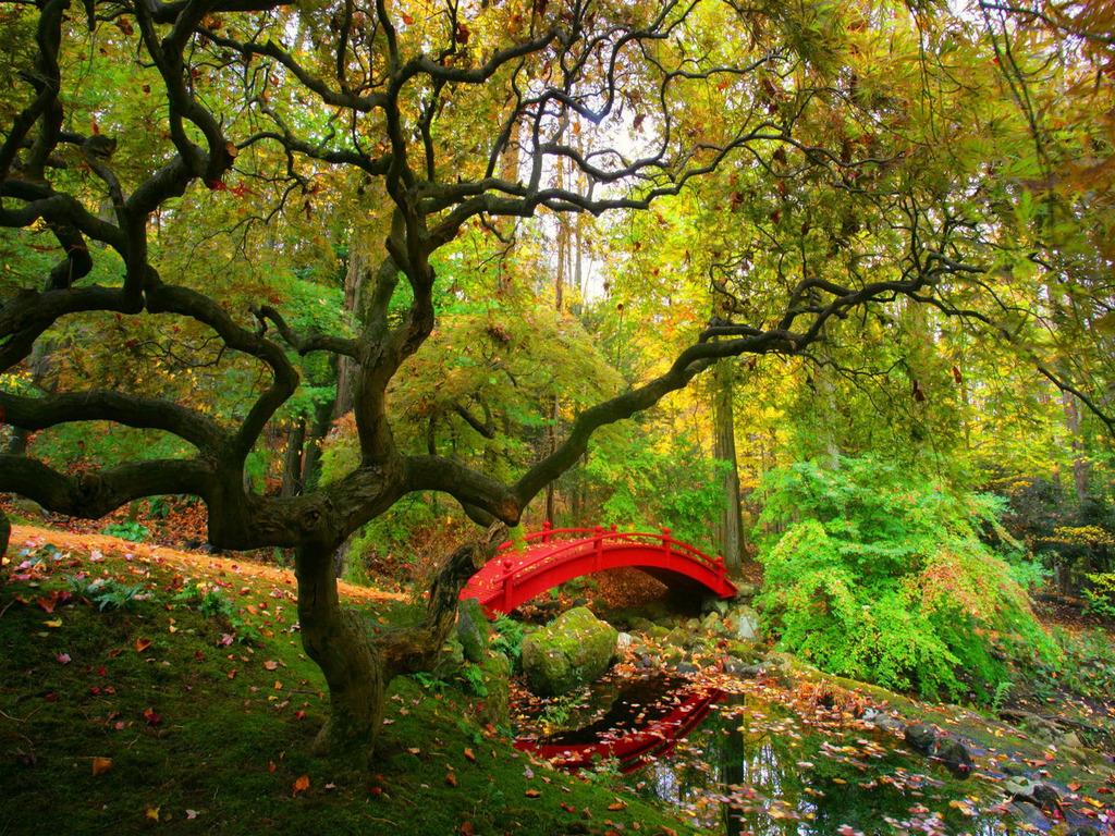Hd Iphone Cute Desktop Wallpapers Hd Nature Scene: Nature Scenes Wallpaper