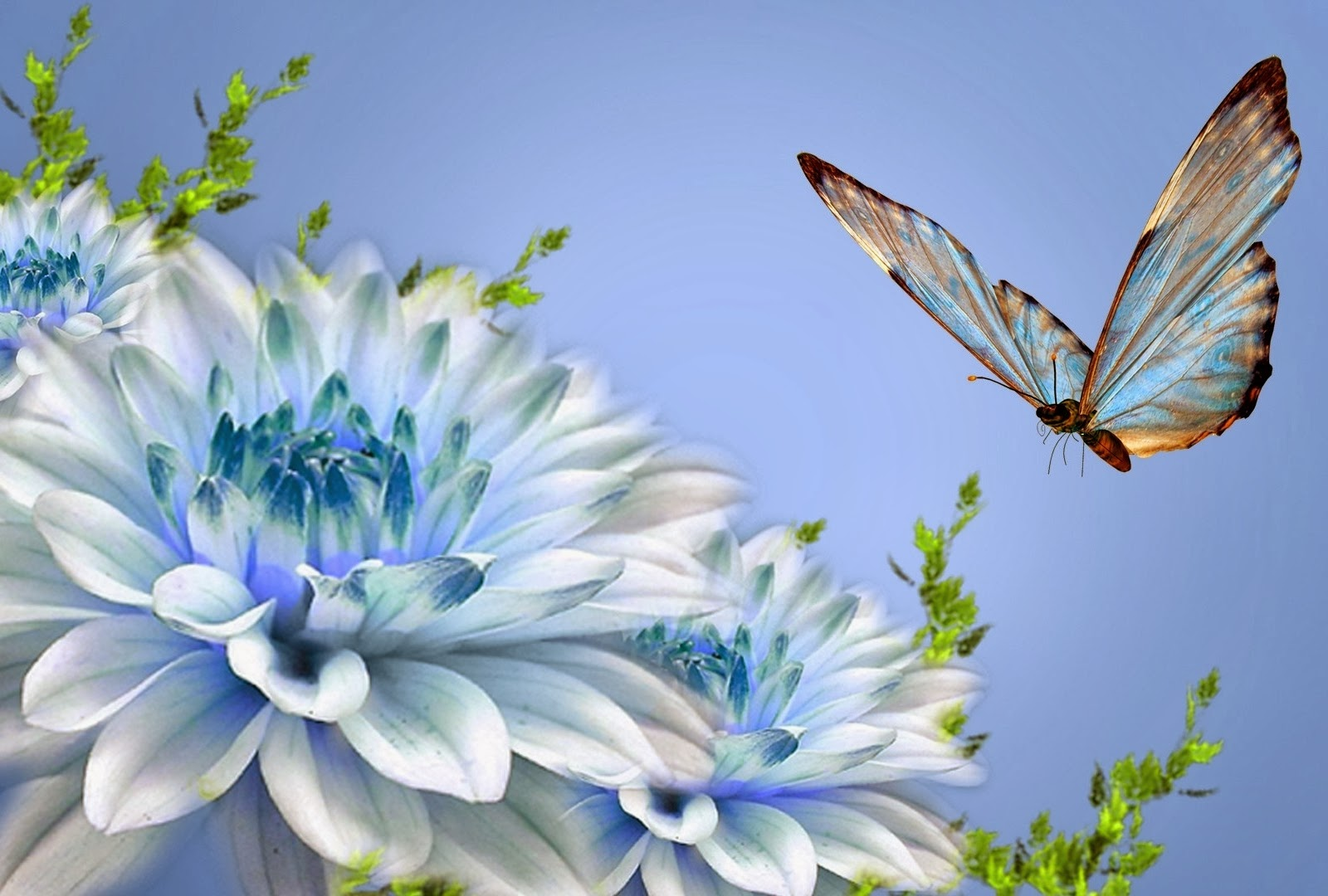 Butterfly hd wallpapers HD WALLPAPERS 1600x1080