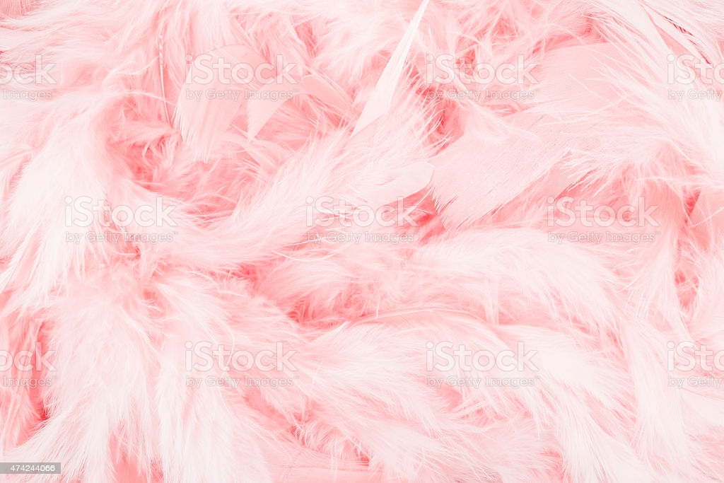 Pink Feather Background Stock Photo   Download Image Now   iStock 1024x683