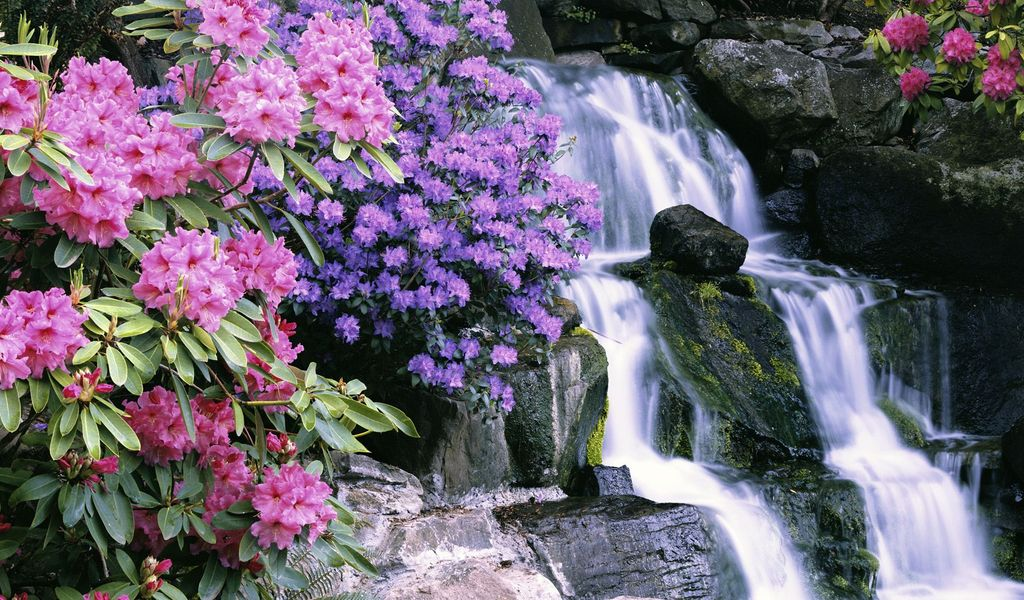 Free spring desktop wallpaper screensaver wallpapersafari - Garden screensavers free ...