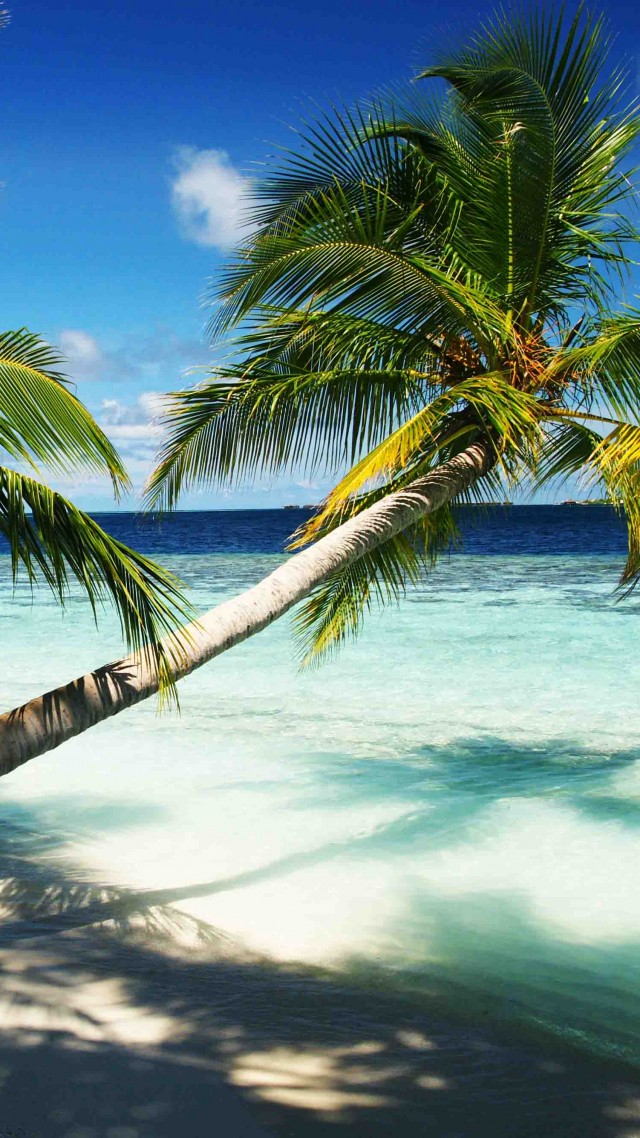 Wallpaper Maldives 4k 5k wallpaper holidays palms paradise 640x1138