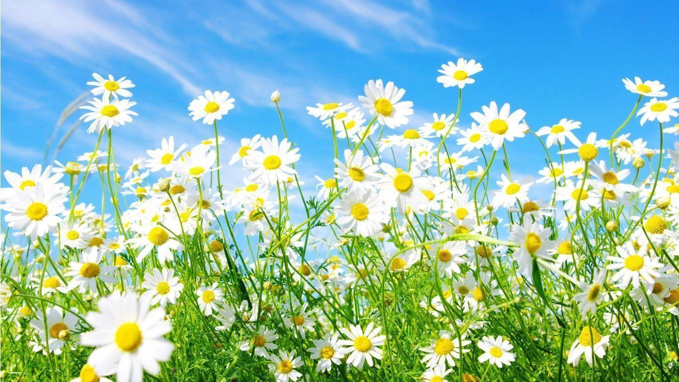 Spring Wallpapers And Screensavers 1366x768
