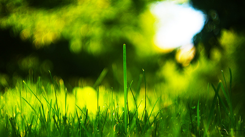 4K Resolution wallpaper 169   Grass 40962304 By Latente 500x281