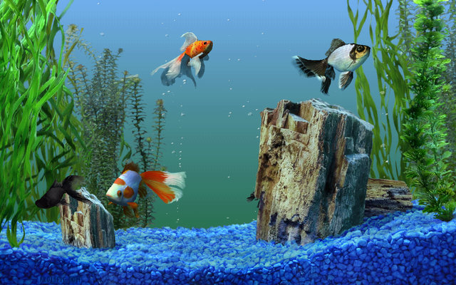 how to get crystal clear marine aquarium water